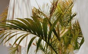 feuille de palmier verte et jaune avec des parasols blanc a côté